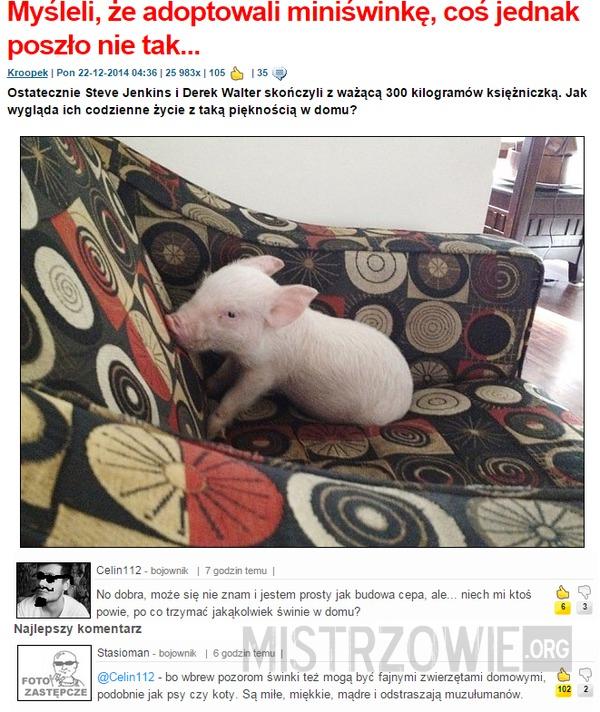 Świnia - najlepszy przyjaciel człowieka –