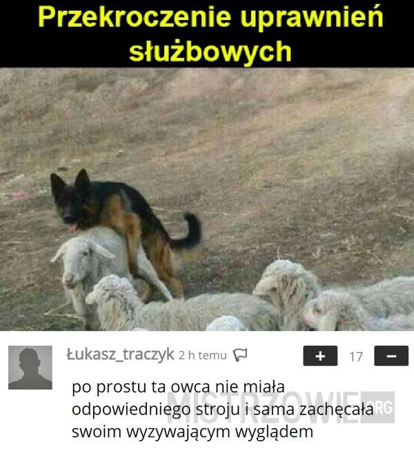 OWCzArek –