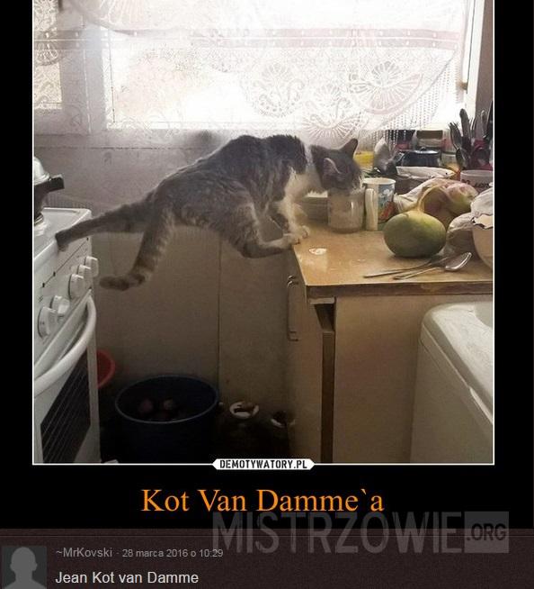 Kot Van Dammea
