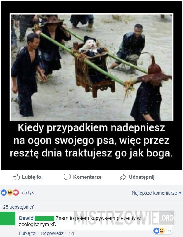 Pies –