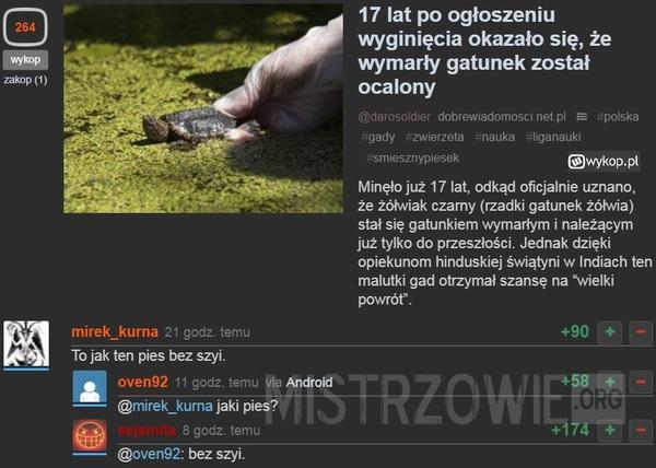 Żółwiak czarny